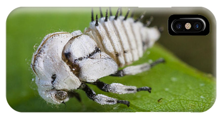 Treehopper IPhone X Case featuring the photograph White Treehopper Nymph by Craig Lapsley