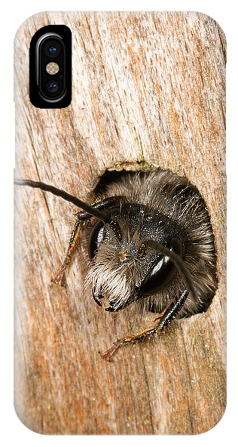 Andrena IPhone X Case featuring the photograph Who Goes There by Bob Kemp