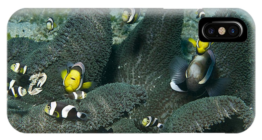 Anemone IPhone X Case featuring the photograph Whole Family Of Clownfish In Dark Grey by Mathieu Meur