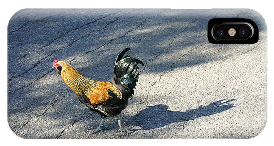 Chicken IPhone X Case featuring the photograph Why Did He Cross The Road by Nina Fosdick