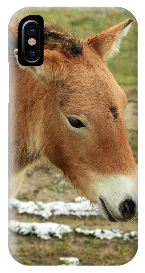 Horse IPhone X Case featuring the photograph Wild Horse by Crystal Heitzman Renskers