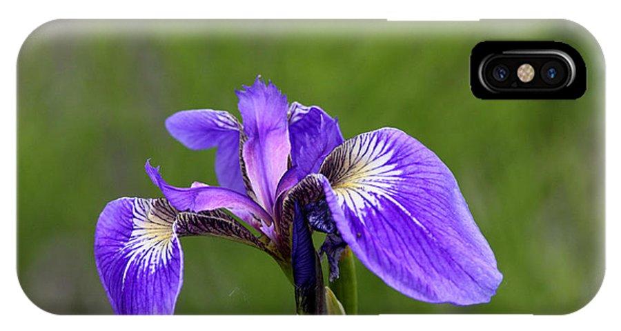 Doug Lloyd IPhone X Case featuring the photograph Wild Iris by Doug Lloyd
