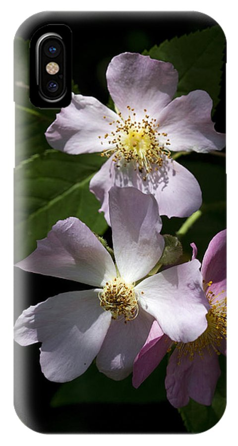 Rosa Virginiana IPhone X Case featuring the photograph Wild Pink Rambling Rose by Kathy Clark