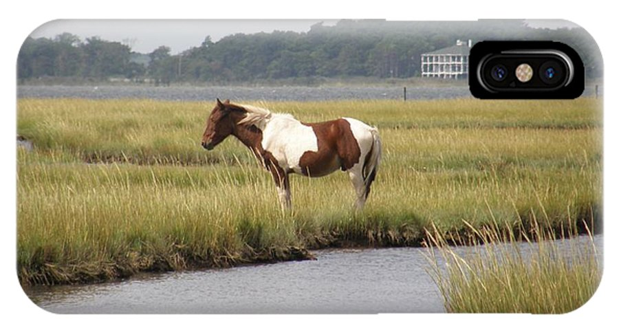 Pony IPhone X Case featuring the photograph Wild Pony In The Marsh On Assateague Island Md by Sven Migot