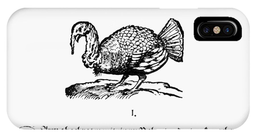 1604 IPhone X / XS Case featuring the photograph Wild Turkey, 1604 by Granger