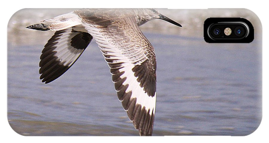 Catoptrophorus Semipalmatus IPhone X Case featuring the photograph Willet In Flight by Roena King
