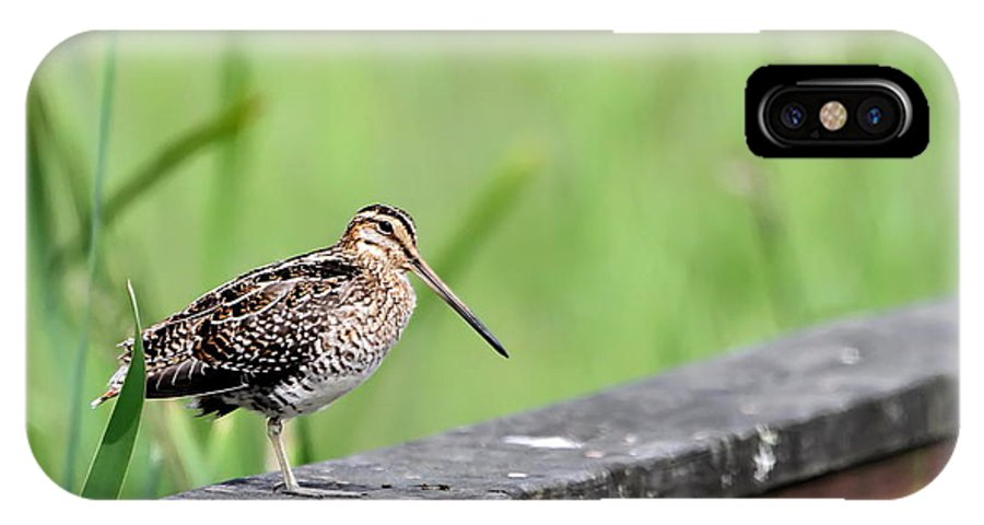 Snipe IPhone X Case featuring the photograph Wilson's Snipe by Angie Vogel