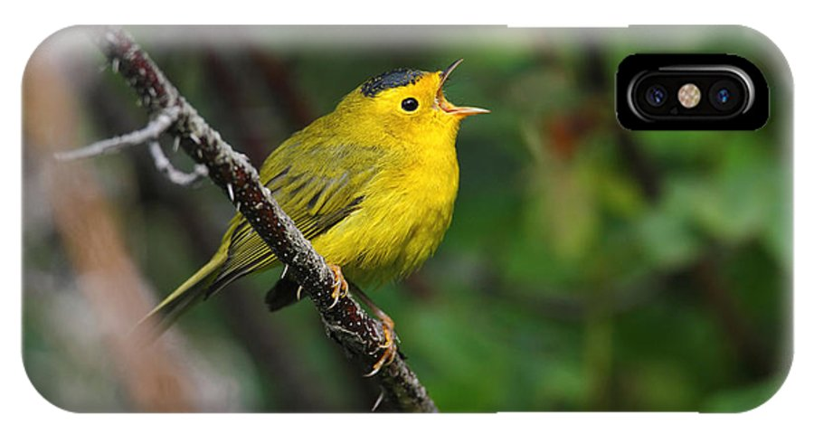 Doug Lloyd IPhone X Case featuring the photograph Wilsons Warbler In Song by Doug Lloyd