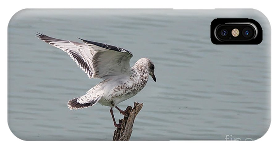 Seagull IPhone X Case featuring the photograph Wing Test by Lori Tordsen