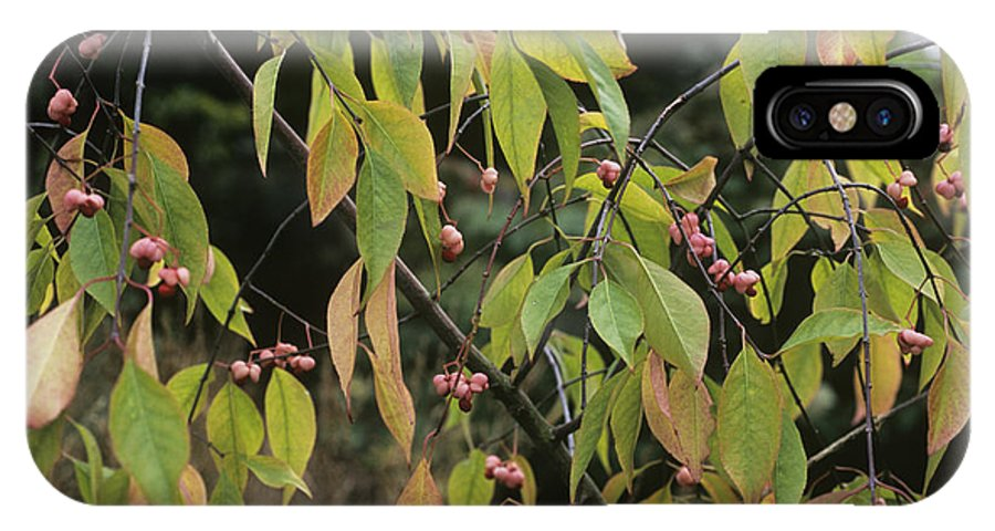 'dart's Pride' IPhone X / XS Case featuring the photograph Winterberry Euonymus 'dart's Pride' by Adrian Thomas