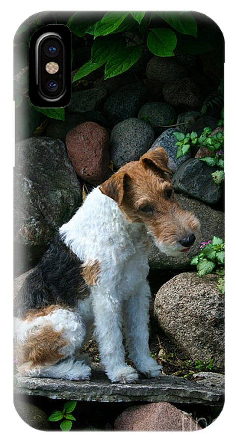 Canine IPhone X Case featuring the photograph Wirehair Fox Terrier by Susan Herber