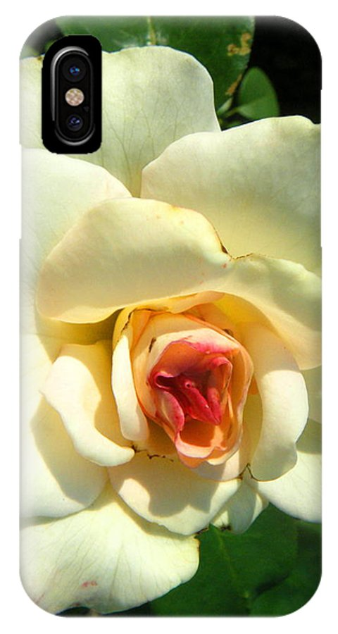 Landscapes IPhone X Case featuring the photograph Wonderland Rose by April Patterson