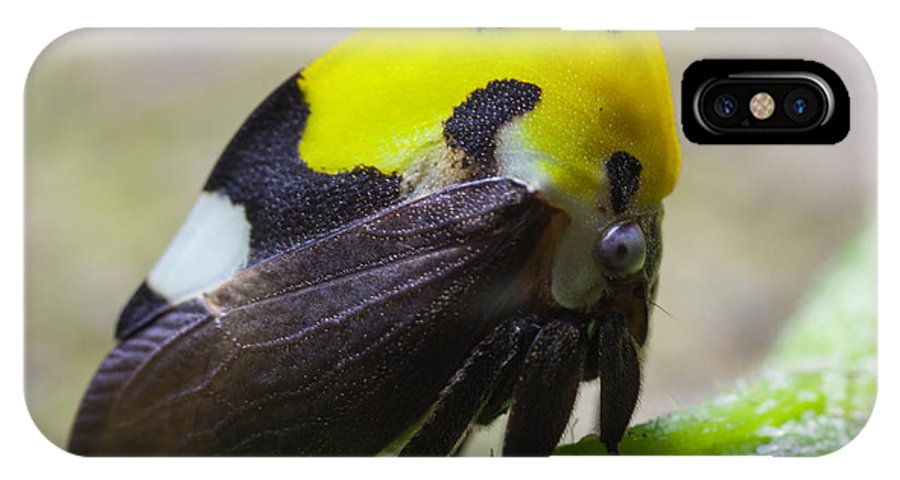 IPhone X Case featuring the photograph Yellow And Black Treehopper by Craig Lapsley