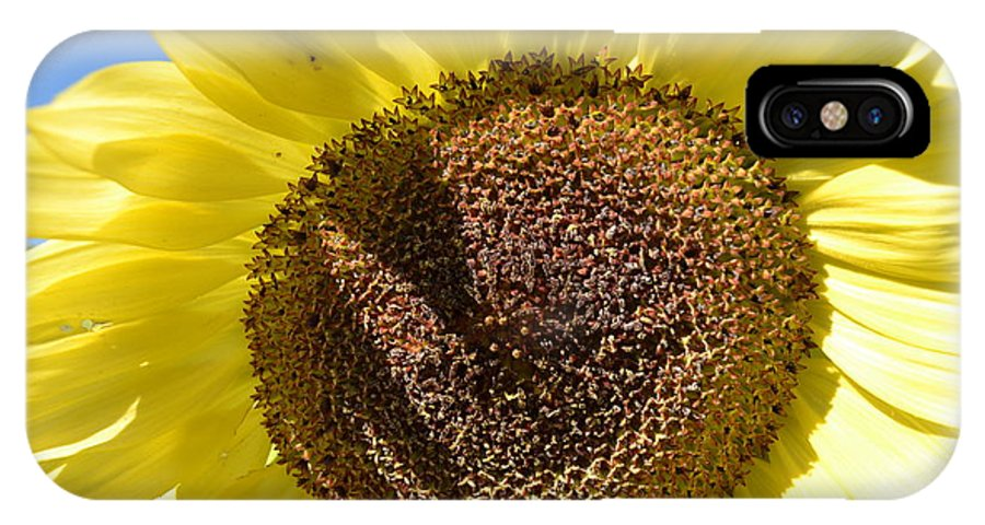 Yellow Sunflower IPhone X Case featuring the photograph Yellow Autumn Sunflower by P S