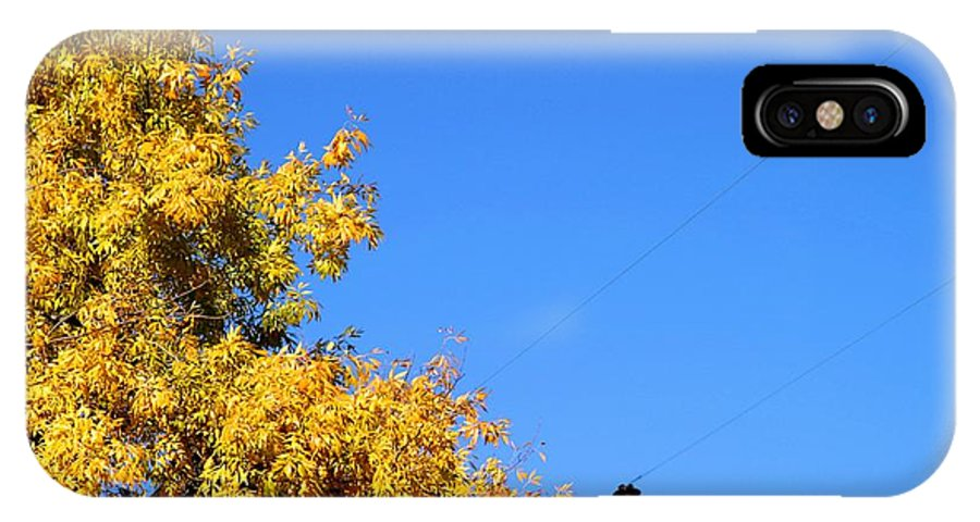 Tree IPhone X Case featuring the photograph Yellow Autumn Tree by Henrik Lehnerer