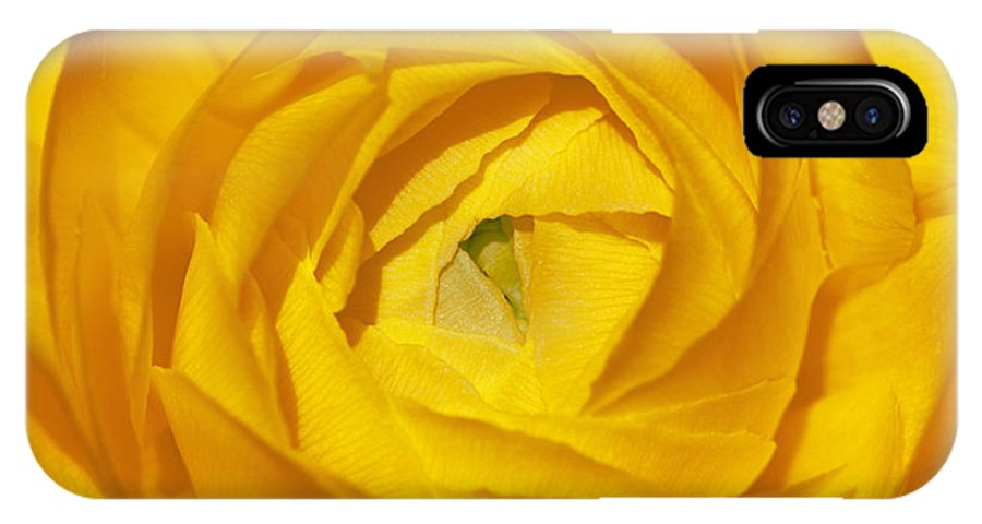 Bronstein IPhone X Case featuring the photograph Yellow Beauty by Sandra Bronstein