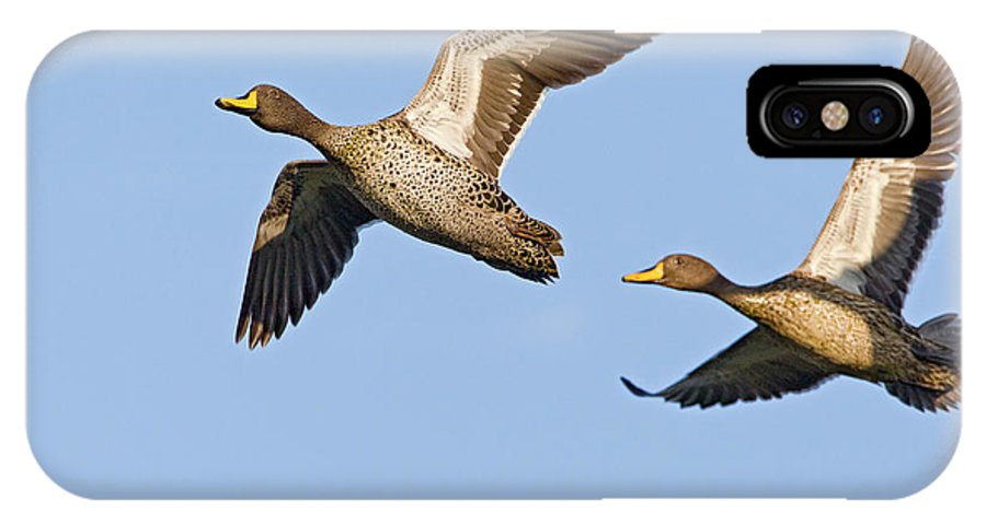 Fn IPhone X Case featuring the photograph Yellow-billed Duck Anas Undulata Pair by Vincent Grafhorst