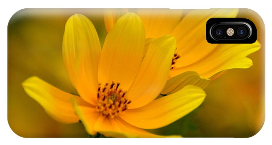 Wild Flower IPhone X Case featuring the photograph Yellow Blaze by Marty Koch