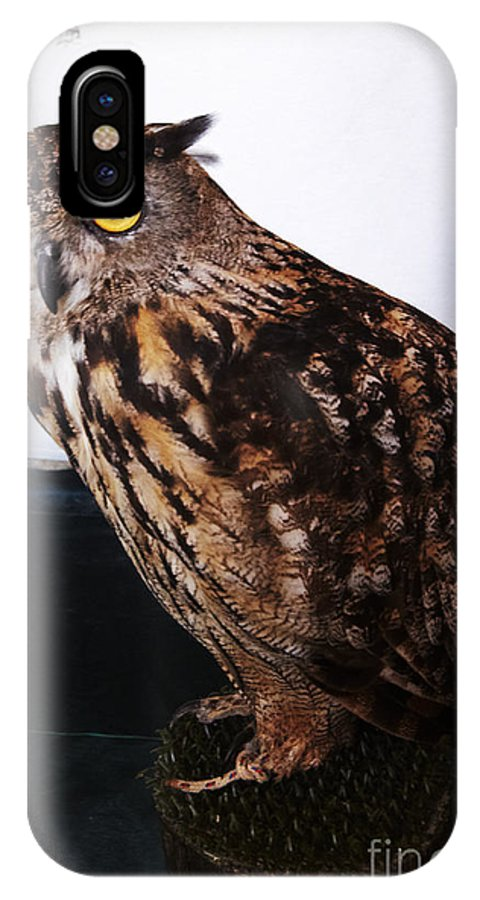 Buho IPhone X Case featuring the photograph Yellow-eyed Owl Side by Agusti Pardo Rossello