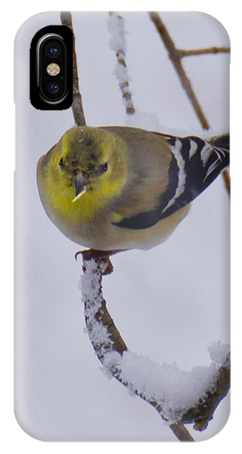 Usa IPhone X Case featuring the photograph Yellow Finch Cold Snow by LeeAnn McLaneGoetz McLaneGoetzStudioLLCcom