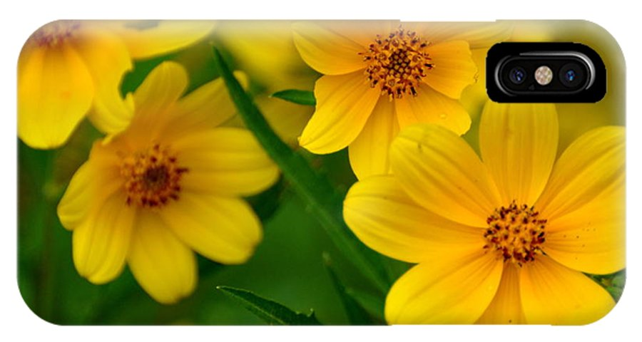 Wildflower IPhone X Case featuring the photograph Yellow Flowers by Marty Koch