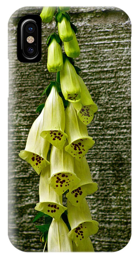 Yellow Foxglove Flower IPhone X Case featuring the photograph Yellow Foxglove Flowers by Debra   Vatalaro