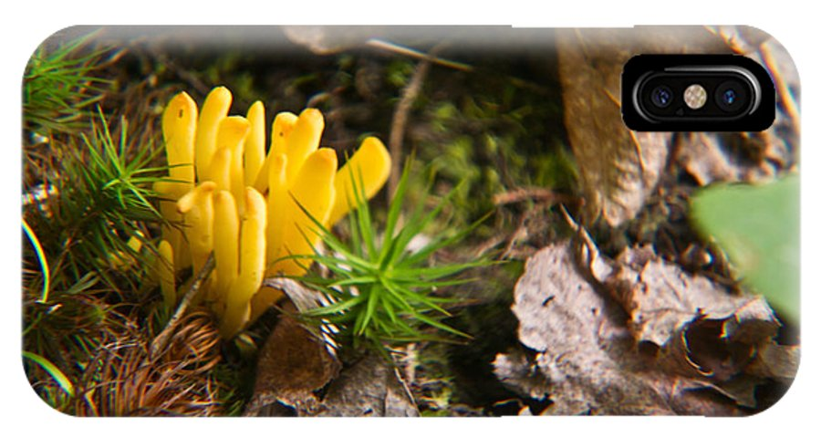 Yellow IPhone X Case featuring the photograph Yellow Fungus 1 by Douglas Barnett
