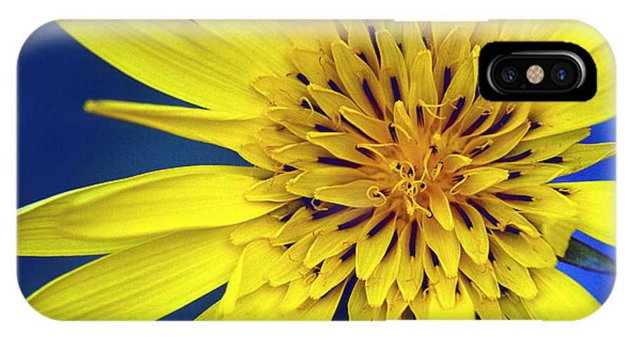Plants IPhone X / XS Case featuring the photograph Yellow Heart by Patrick Kessler