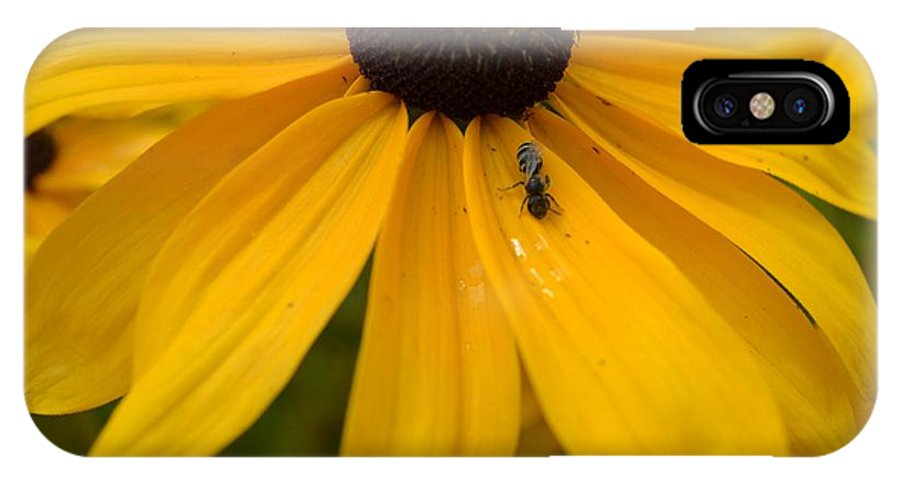 Yellow IPhone X Case featuring the photograph Yellow In Nature by P S