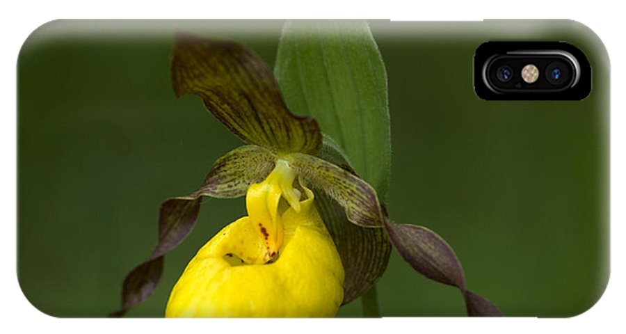 Ladys Slipper IPhone X Case featuring the photograph Yellow Lady's Slipper by Bob Christopher