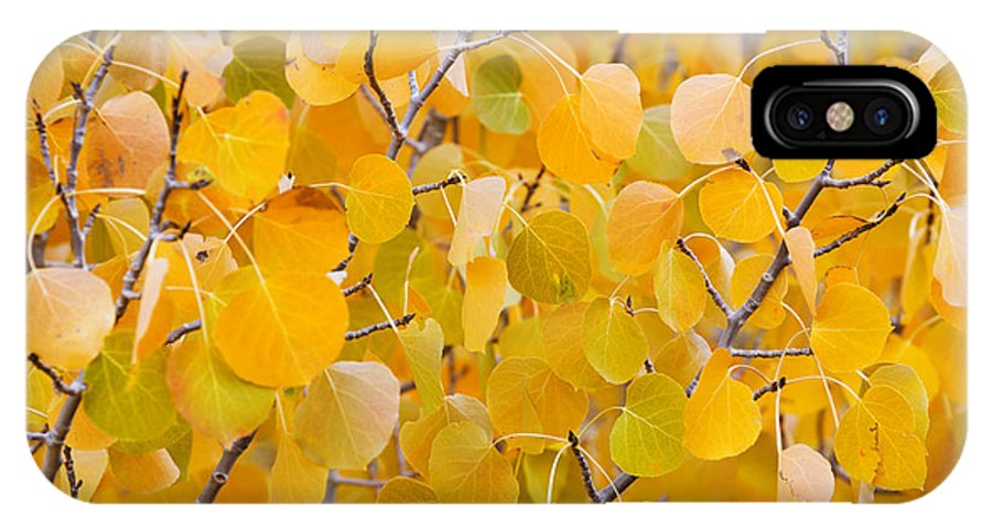 Aspen IPhone X Case featuring the photograph Yellow Leaf Patterns by MakenaStockMedia - Printscapes