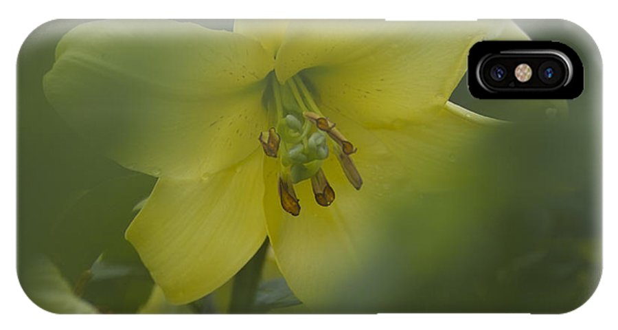 Nature IPhone X Case featuring the photograph Yellow Lily Flower by Heiko Koehrer-Wagner