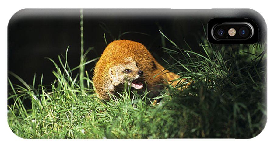 Cynictis Penicillata IPhone X / XS Case featuring the photograph Yellow Mongoose by David Aubrey