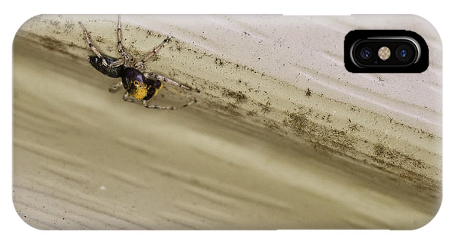 Yellow IPhone X Case featuring the photograph Yellow Palp Spider 1 by Douglas Barnett