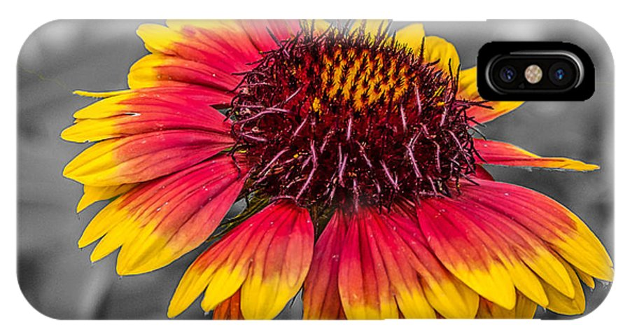 Flowers IPhone X Case featuring the photograph Yellow Ring by Guy Whiteley