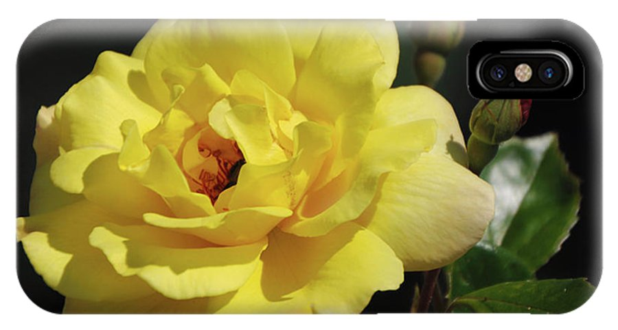 Yellow IPhone X Case featuring the photograph Yellow Rose by Ronald Grogan