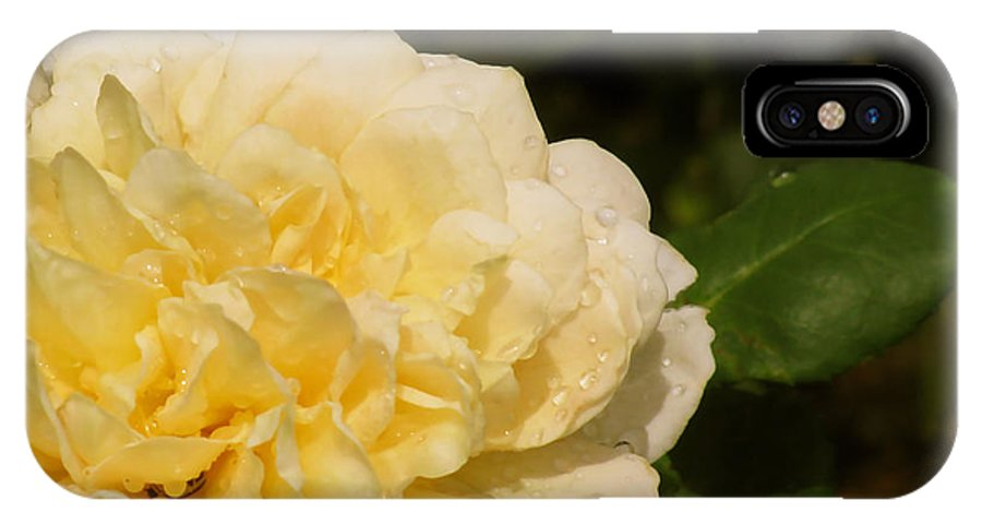 Yellow Rose Water Drops IPhone X Case featuring the photograph Yellow Rose Water Drops by Debra   Vatalaro