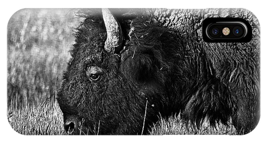 Yellowstone IPhone X Case featuring the photograph Yellowstone Bison by Dan Wells