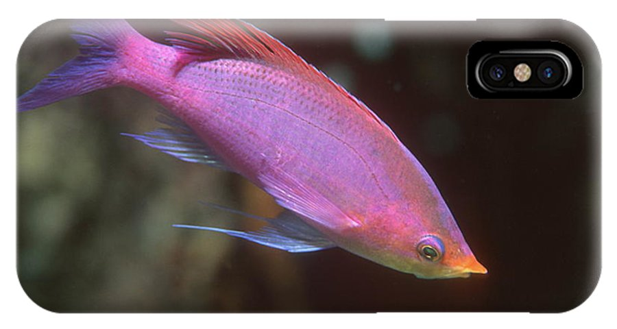 Pseudanthias Tuka IPhone X / XS Case featuring the photograph Yellowstriped Fairy Basslet by Georgette Douwma