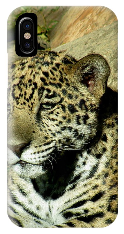 Cat IPhone X Case featuring the photograph Young Jaguar by Paul Slebodnick