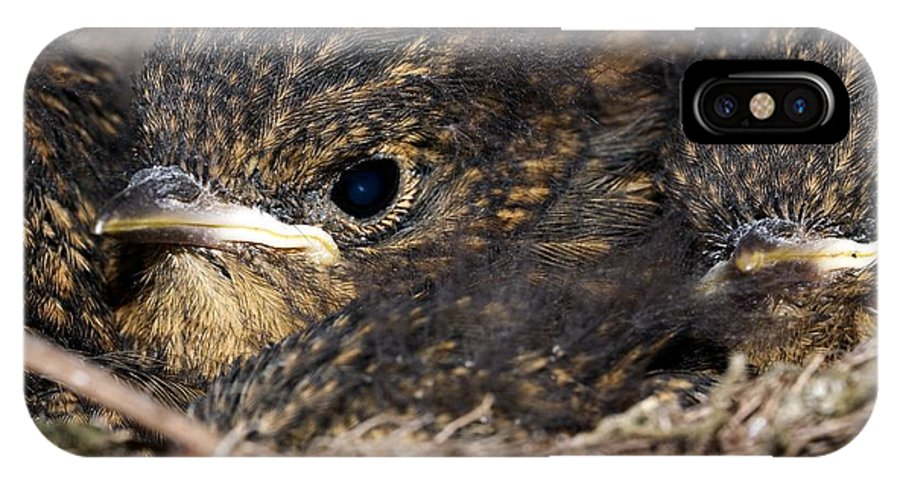 European Robin IPhone X / XS Case featuring the photograph Young Robins by Dr Jeremy Burgess