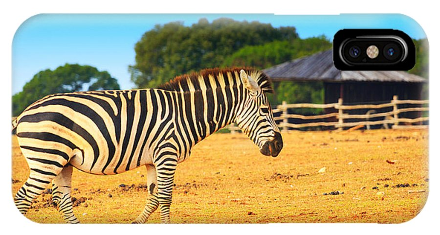 Africa IPhone X Case featuring the photograph Zebra In The Grassland by Nino Rasic