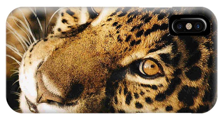 Jaguar Face. IPhone Case featuring the photograph       Waiting by Leandro Sebastian  Marquez