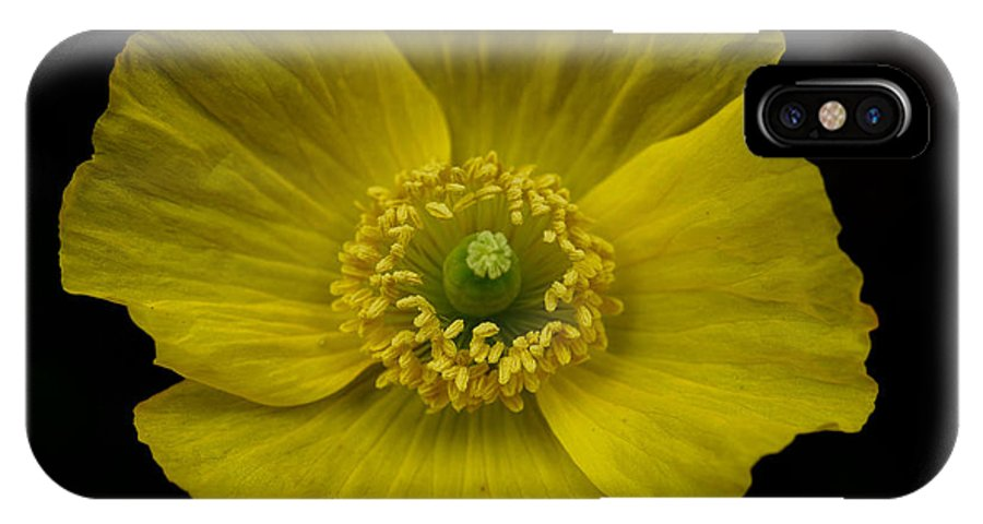 Iceland Poppy Flower IPhone X Case featuring the photograph Iceland Poppy by Brothers Beerens