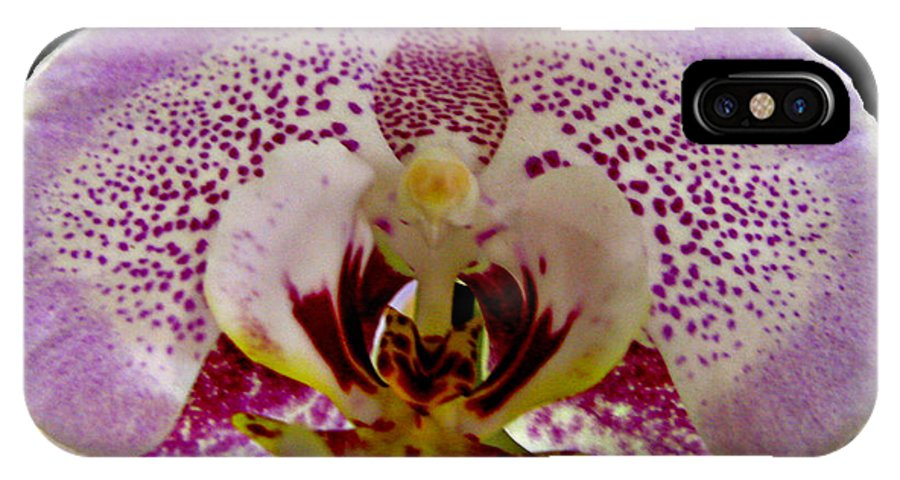 Kiss Of Orchid IPhone X Case featuring the photograph Kiss Of Orchid by Debra   Vatalaro