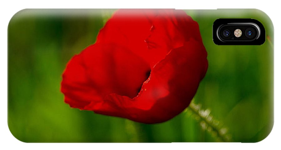 Poppy Red Flower IPhone X Case featuring the photograph Spring Poppy by Brothers Beerens