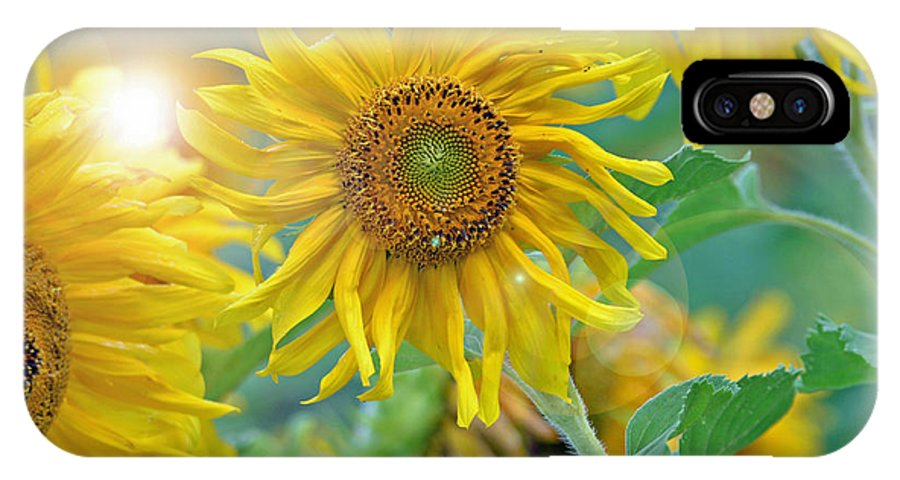 Sunflower IPhone X / XS Case featuring the photograph Sunflower by Lila Fisher-Wenzel