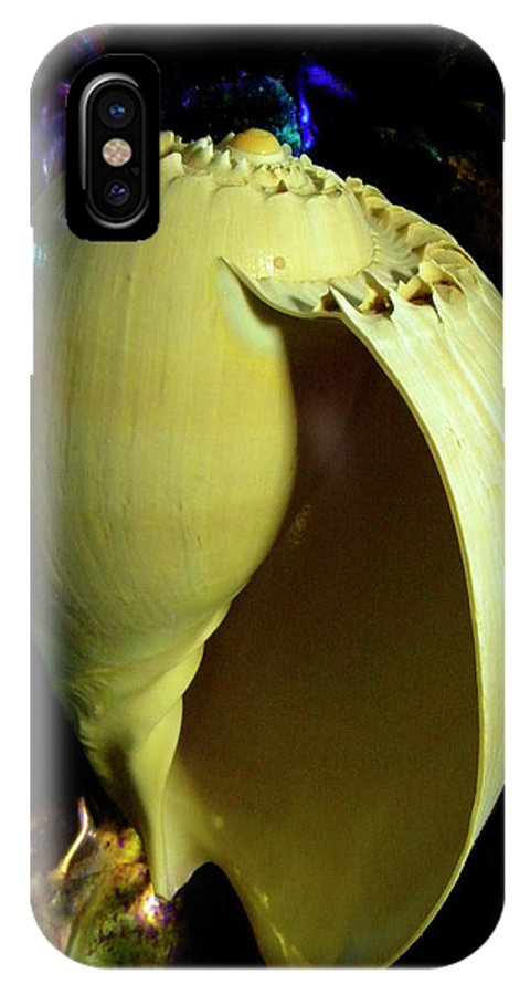 Frank Wilson IPhone X Case featuring the photograph  Voluta Amphora Seashell by Frank Wilson