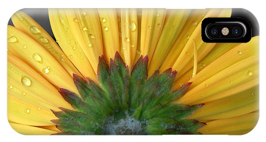 Flowers IPhone X Case featuring the photograph Water Drops On Gerbera Daisy by Amy Fose