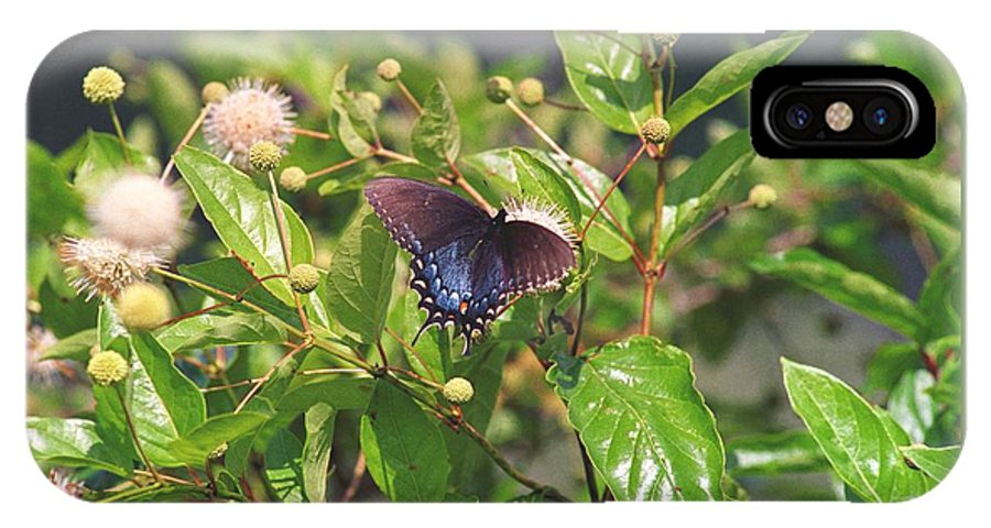 Butterfly IPhone X Case featuring the photograph 080706-6 by Mike Davis